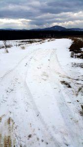 Cisy - zaśnieżona droga